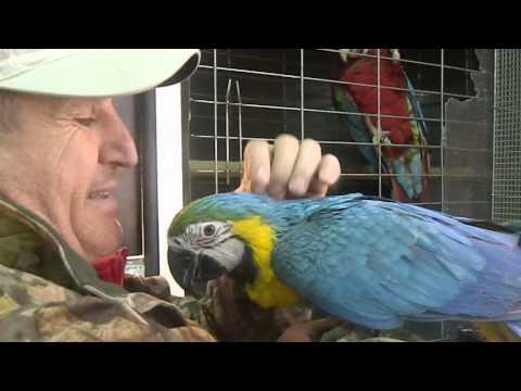 vand papagali 0722226991 / 0768710245 BUCURESTI clip 3