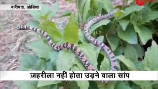 Rare flying snake rescued from Mayurbhanj in Odisha - ZEENEWS