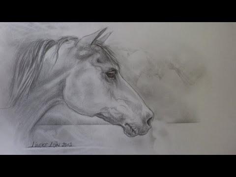 hoe teken je een paardenhoofd - de schaduwen