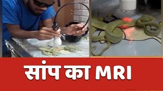 Namaste Bharat: Mumbai doctors conduct MRI of a snake to fix its bent spine - ABPNEWSTV