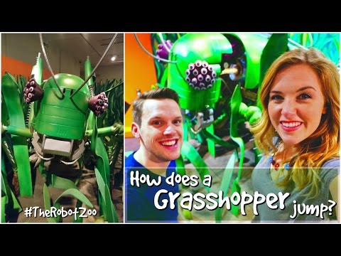 How does a Grasshopper jump? | The Robot Zoo | Maddie Moate