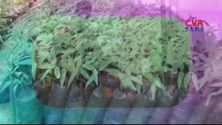నర్సరీల పద్ధతిలో కంది సాగుతో అధిక లాభాలు : Raithe Raju | CVR News - CVRNEWSOFFICIAL