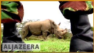 🇰🇪 White rhino faces extinction threat after last male dies | Al Jazeera English - ALJAZEERAENGLISH