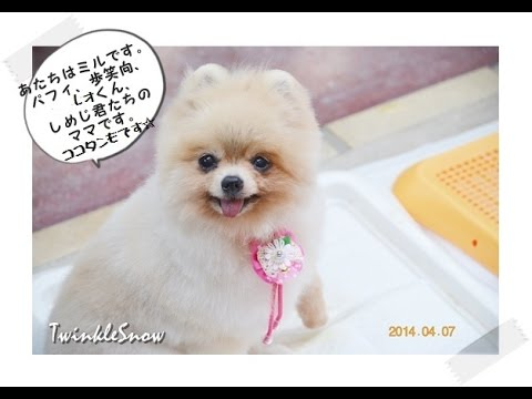 TWINKLESNOW犬舎の引退犬 奇跡の生還(^.^)
