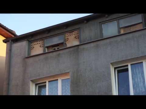 H. Zaskowski - Oddział PZHGP Ziemi Suwalsko - Augustowskiej - pierwsze gołębie już są - 19.07.2014r.