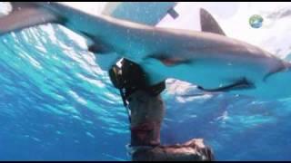Shark Attack Survival Guide - Fending Off Sharks - Shark Week 2010
