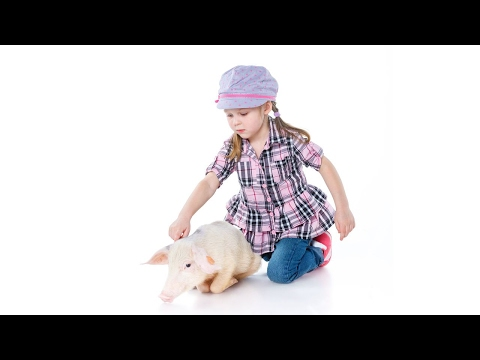 Is It Legal to Keep a Pig in Your Home? | Pet Pigs