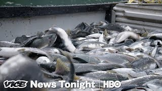 Alaska Initiative To Protect Wild Salmon Could Kill Off A Massive Open-Pit Mine (HBO) - VICENEWS