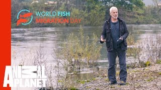 Join Jeremy Wade In Celebrating World Fish Migration Day - ANIMALPLANETTV