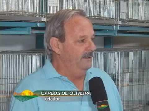 PORTAL RURAL - RECORD NEWS - CRIAÇÃO DE PÁSSAROS SILVESTRE