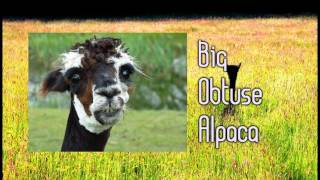 Royalty Free :Big Obtuse Alpaca