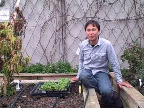 Garden Update Episode #377 Urban Gardening Tour