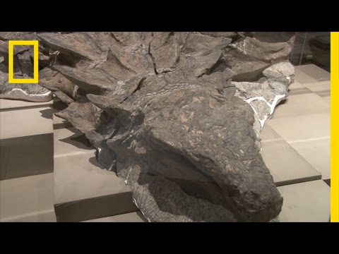 Newly Unveiled Dinosaur Fossil is Best Preserved Of Its Kind | National Geographic