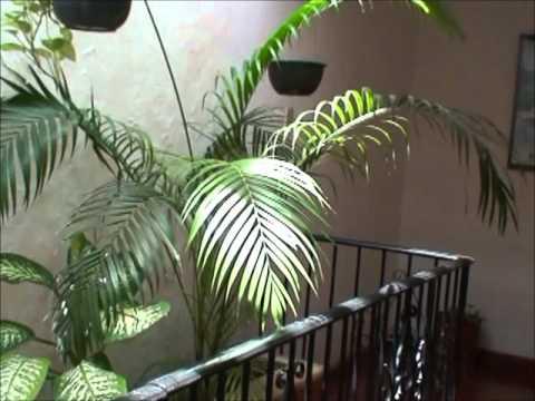 Casa Yucatan Real Estate CY-1215: Hotel for sale Merida Yucatan Mexico