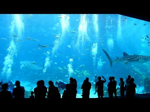 World's Largest Aquarium Big Tank, Atlanta