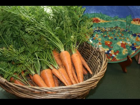Carrot Harvest from Container Garden