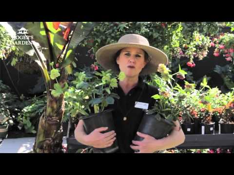 Plants for Shade with Dalia Brunner