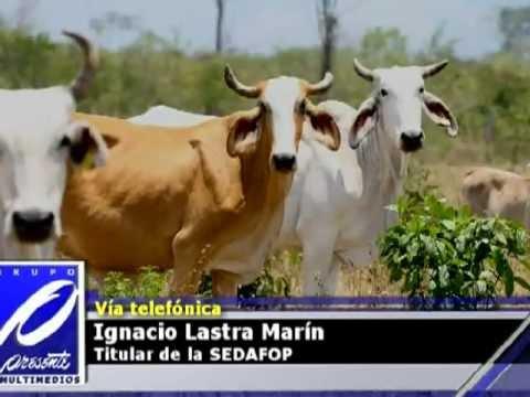 Desabasto de carne y ganado es asunto mundial: SEDAFOP