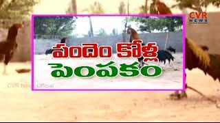 పందెం కోళ్ల  పెంపకం : Pandem Kolla Pempakam in West Godavari District | Raithe Raju | CVR News - CVRNEWSOFFICIAL
