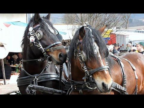 Parenje Konja