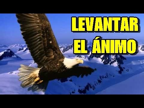 Video para levantar el animo... y seguir luchando!