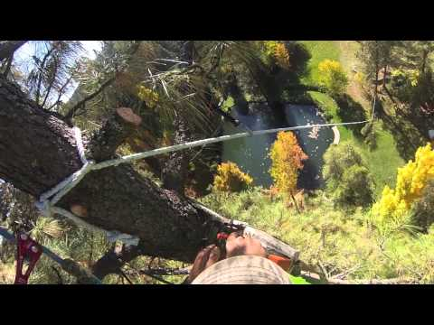 Big Tree Removal with Zipline and Crane