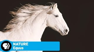 "Official Preview | Equus ""Story of the Horse"" 