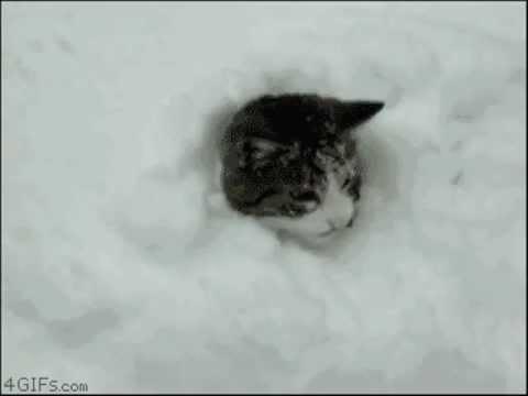 Funny cats / śmieszne koty