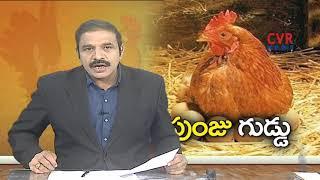 కోడిపుంజు@గుడ్డు.. విచిత్రం  | Rooster Lays Egg | Sangareddy Dist | CVR News - CVRNEWSOFFICIAL