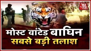 Most Wanted आदमखोर बाघिन के लिए जारी सबसे बड़ा ऑपरेशन   Aajtak Special - AAJTAKTV