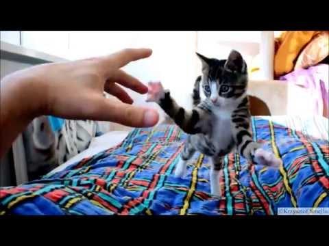Crazy Kitten Attack (Smile!) – ...