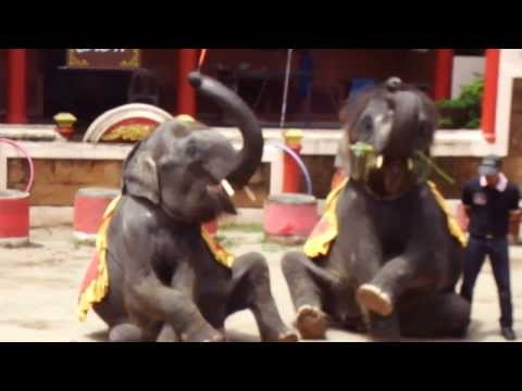 Animal Elephant baby dance part 1 topten funny@croos