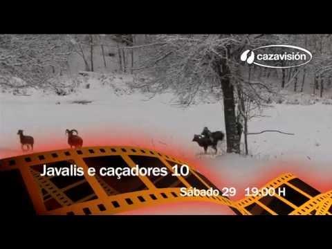 Javalis e caçadores 10