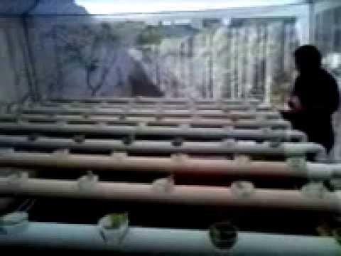horta hidropônica parte 2