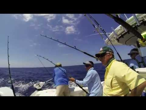 Reeling in a Bonita - Gulfstream Fishing