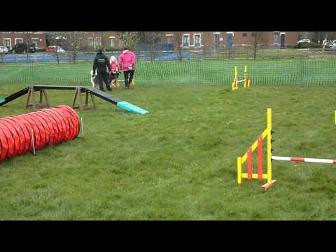 AMCUK Fun Day Scotland - Nanook on the agility course