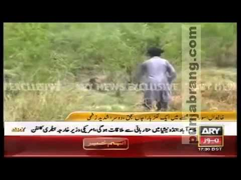 wild pig attacks woodcutter,one killed other lost arm khanewal pakistan