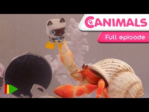 Canimals - Can VS. Shell