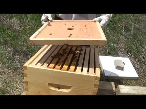 Bee Hives - First inspection after Installation