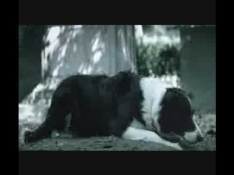 Do Not Abandon Your Pets - Unio Zoofila - TV Comercial (English Subtitles)