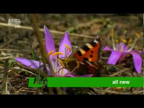 Wild France Advert on Animal Planet HD 2012 1080p