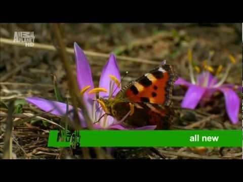 Wild France Advert on Animal Planet HD 2012 1080p