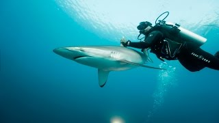 Cuba's Secret Scuba Dive Site Is One of a Kind - BLOOMBERG