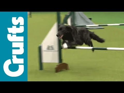Rescue Dog Agility - Crufts 2012