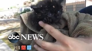 Adorable Kitten Rescued From Manhole in Arizona - ABCNEWS
