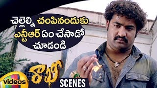 Jr NTR Takes Revenge on Ravi Varma | Rakhi Telugu Movie Scenes | Ileana | Charmi | DSP |Mango Videos - MANGOVIDEOS