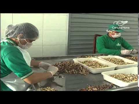 CN Notícias: Cooperativa profissionaliza venda da castanha de caju em SE