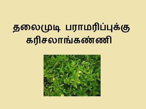 தலைமுடி  பராமரிப்புக்கு  கரிசலாங்கண்ணி karisalankanni for hair
