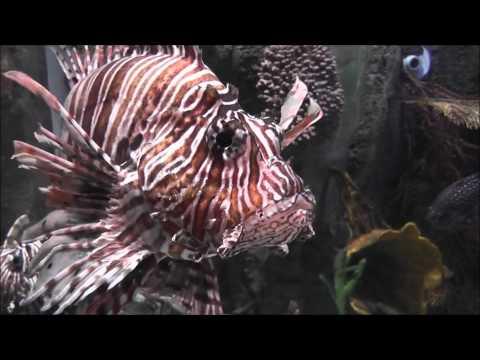 Dubai Underwater Zoo [1080p]