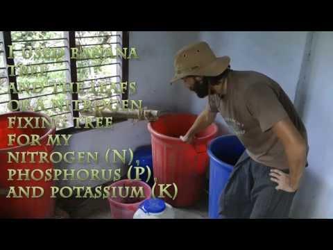 FREE - Homemade Plant fertilizer!